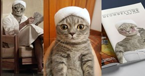 Cat Wearing a Towel Gets Photoshopped Into Some Pretty Weird Situations
