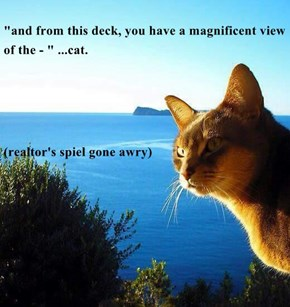 """""""and from this deck, you have a magnificent view of the - """" ...cat. (realtor's spiel gone awry)"""