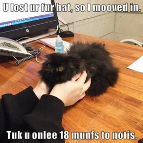 U lost ur fur hat, so I mooved in.  Tuk u onlee 18 munfs to notis.