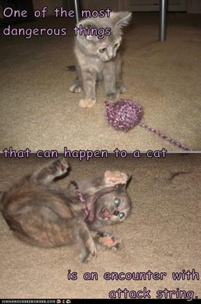 One of the most                                dangerous things that can happen to a cat  is an encounter with                  attack string.