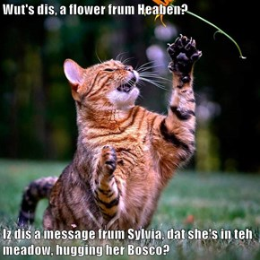Wut's dis, a flower frum Heaben?  Iz dis a message frum Sylvia, dat she's in teh meadow, hugging her Bosco?