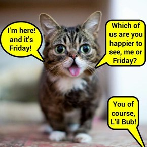 The happiest cat since Happy Cat (recaption: http://tinyurl.com/hn6uprb