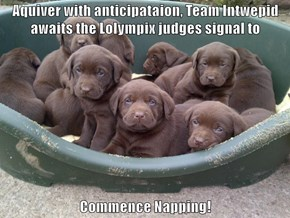 Aquiver with anticipataion, Team Intwepid awaits the Lolympix judges signal to   Commence Napping!