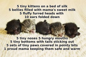 5 tiny kittens