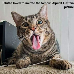 Tabitha loved to imitate the famous Alpurrt Einstein picture