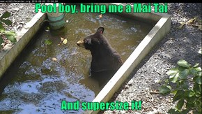 This Heat Turns Me into a Real Bear