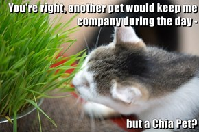 You're right, another pet would keep me company during the day -  but a Chia Pet?