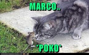MARCO..       *POKO*