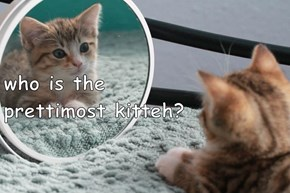 who is the                                prettimost kitteh?