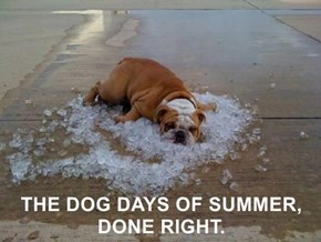 THE DOG DAYS OF SUMMER, DONE RIGHT.