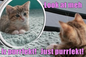 Look at meh  Iz purrfekt!   Just purrfekt!