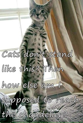 Cats don't stand like this? Then  how else am I supposed to reach the chandelier?