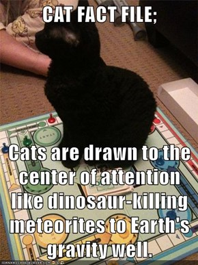 CAT FACT FILE;  Cats are drawn to the center of attention like dinosaur-killing meteorites to Earth's gravity well.