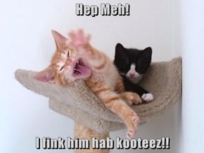Hep Meh!  I fink him hab kooteez!!