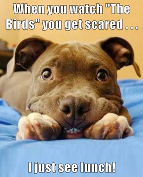 """When you watch """"The Birds"""" you get scared . . .   I just see lunch!"""