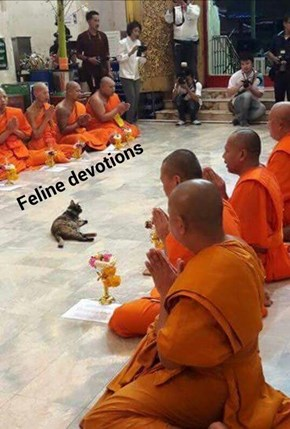 Feline Devotions (recaption: http://tinyurl.com/h6by37u