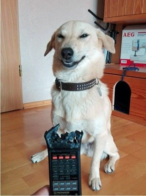 He's Not Even Remotely Sorry