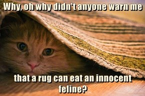 Why, oh why didn't anyone warn me  that a rug can eat an innocent feline?