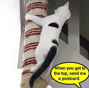 When you get to the top, send me a postcard (recaption: http://tinyurl.com/hll5od6