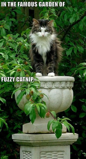 IN THE FAMOUS GARDEN OF FUZZY CATNIP.