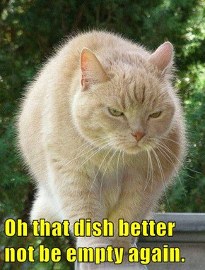 Oh that dish better not be empty again.