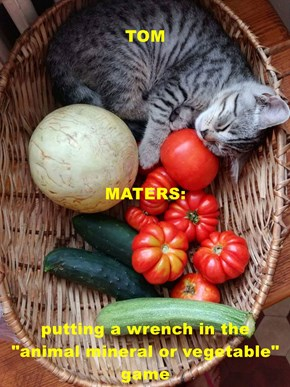 "TOM MATERS: putting a wrench in the                                                                         ""animal mineral or vegetable"" game"
