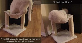 Cat Tries so Hard to Get Comfortable in an Undersized Cat Tree
