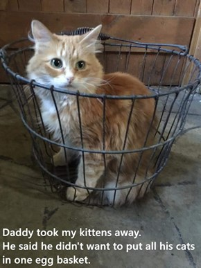 Daddy took my kittens away.                He said he didn't want to put all his cats in one egg basket.