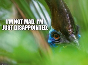 "Cassowary got that ""disapproving father"" face."