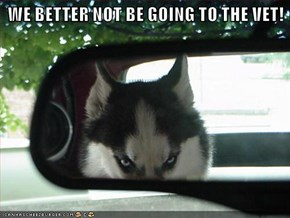 WE BETTER NOT BE GOING TO THE VET!