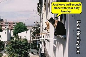 Don Henley cat (recaption: http://tinyurl.com/j7e89hy