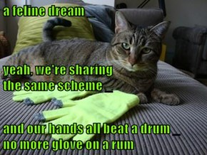 a feline dream _ yeah, we're sharing                                          the same scheme _ and our hands all beat a drum _         no more glove on a rum