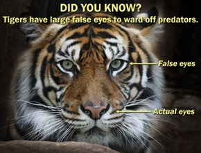 Wow! Tigers Sure Are Amazing