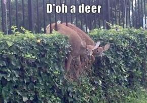 D'oh a deer