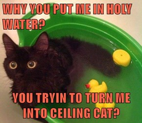 WHY YOU PUT ME IN HOLY WATER?  YOU TRYIN TO TURN ME INTO CEILING CAT?