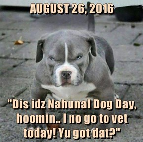 "AUGUST 26, 2016  ""Dis idz Nahunal Dog Day, hoomin.. I no go to vet today! Yu got dat?"""