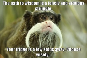 The path to wisdom is a lonely and arduous struggle.  Your fridge is a few steps away. Choose wisely...
