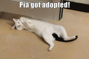 Pia got adopted!