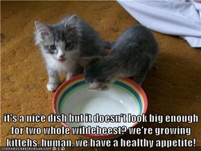 it's a nice dish but it doesn't look big enough for two whole wildebeest? we're growing kittehs, human, we have a healthy appetite!