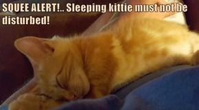 SQUEE ALERT!.. Sleeping kittie must not be disturbed!