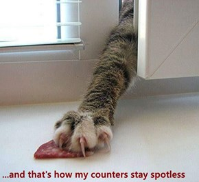 ...and that's how my counters stay spotless
