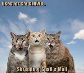 Uses for Cat CLAWS..   Shredding  Snail's  Mail