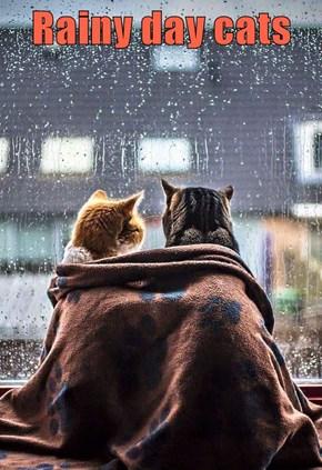 Rainy day cats
