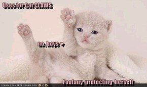 Uses for Cat CLAWS                                      no, boys ♥                                              Foofany  protecting  herself