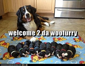 welcome 2 da woofurry