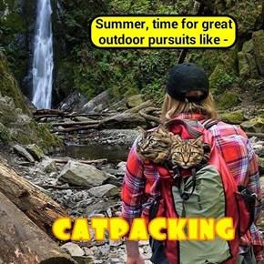 CatPacking (http://tinyurl.com/hgtfl27