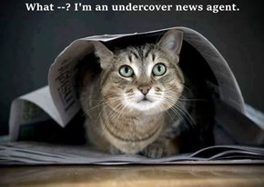 What --? I'm an undercover news agent.
