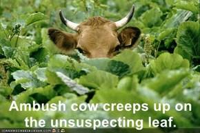 Ambush cow creeps up on the unsuspecting leaf.