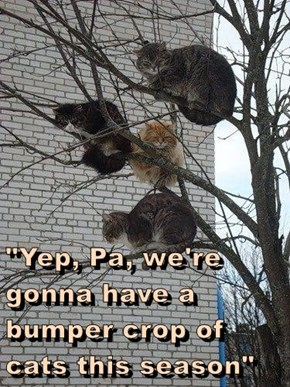 """""""Yep, Pa, we're gonna have a bumper crop of cats this season"""""""