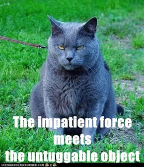 The impatient force meets                                 the untuggable object